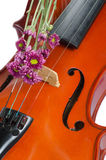 Violin and purple daisy. On  white background Royalty Free Stock Photo