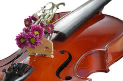 Violin and purple daisy. On  white background Stock Photo