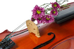 Violin and purple daisy. On  white background Royalty Free Stock Photography