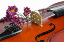 Violin and purple daisy. On  white background Stock Image