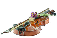 Violin and purple daisy on white background. Violin and purple daisy isolated on white background Royalty Free Stock Photography