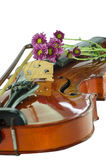 Violin and purple daisy on white background. Violin and purple daisy isolated on white background Stock Photo