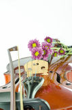 Violin and purple daisy on white background. Violin and purple daisy isolated on white background Stock Photography