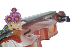 Violin and purple daisy on white background. Violin and purple daisy isolated on white background Stock Image