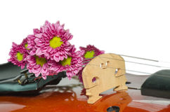 Violin and purple daisy on white background. Violin and purple daisy isolated on white background Stock Images