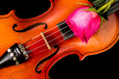 Violin and red rose on black background. Royalty Free Stock Images