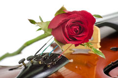 Violin and a red rose Royalty Free Stock Photo
