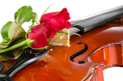 Violin and red roses. Violin and two red roses on white background Royalty Free Stock Photos
