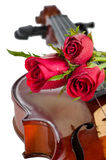 Violin and red roses. With water drop on white background Royalty Free Stock Photo