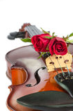 Violin and red roses. On white background Stock Photo