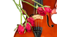 Violin and red roses Stock Photos