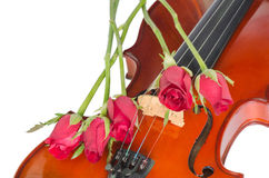 Violin and red roses. On white background Stock Images