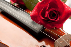 Violin and rose Royalty Free Stock Images