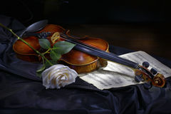 Violin with rose. Vintage violin with white rose stock images