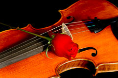 Violin with Rose Stock Photography