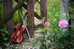 The violin in rose garden Stock Photo