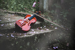 The violin in rose garden Stock Images