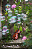The violin and rose garden Royalty Free Stock Image