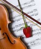 Violin, rose and music royalty free stock image