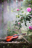 The violin and rose Stock Photo