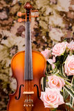 Violin and rose Stock Photos
