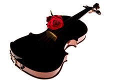 Violin and rose, Violin orchestra musical instruments Stock Images