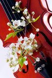 Violin and spring blooming Stock Photo