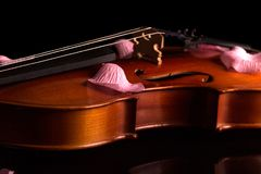 The violin is stringed musical instrument, and rose petals on top, isolated on black Royalty Free Stock Photography