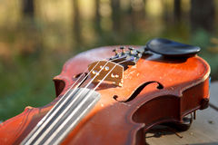Violin in sun lights Royalty Free Stock Image