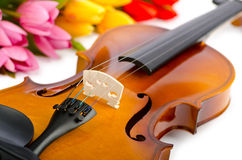 Violin and tulip flowers. On white Royalty Free Stock Images