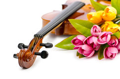 Violin and tulip flowers. On white Royalty Free Stock Image