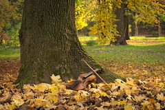 Violin under the tree Royalty Free Stock Images