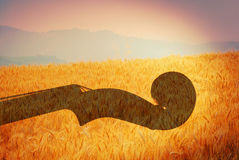 Violin and wheat field Stock Photography