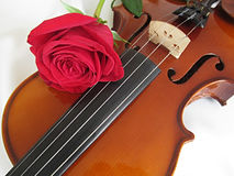 Violin. A violin on white background Royalty Free Stock Photo