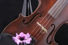 Violin with Wine bottle and Flower. Close up of a violin with a bottle in the background accented by a single flower stock images