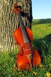 Violine auf dem Gras Lizenzfreies Stockfoto
