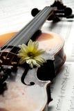 Violine, Blume auf Musikpapier lizenzfreies stockfoto
