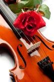 Violine und stieg Lizenzfreie Stockfotos