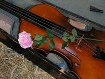 Violine und stieg Lizenzfreies Stockfoto