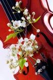 Violinen- und Frühlingsblühen Stockfoto