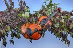 Violinen und Natur Stockfotos
