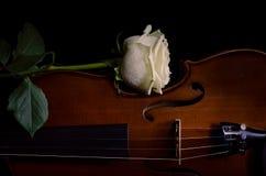 Violinenmusikinstrument des Orchesters mit Gelbrose Stockbilder