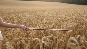 Violinist girl walking through a wheat field. Close up. Slow motion stock footage