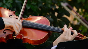 Violinist playing violin or viola in a concert. Musician playing viola in a string quartet on a concert stock video