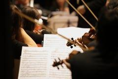 Violinista Fotos de Stock Royalty Free