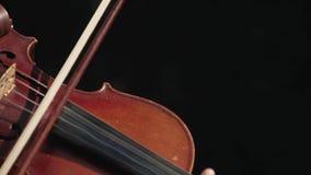 Violinista bonito joven de la muchacha que toca el violín almacen de video