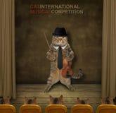 Violinista del gato en etapa fotos de archivo libres de regalías