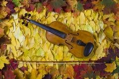 Violino contra o contexto da folha do outono Imagens de Stock Royalty Free