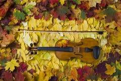 Violino contra o contexto da folha do outono Fotos de Stock