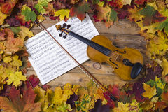 Violino contra o contexto da folha do outono Foto de Stock